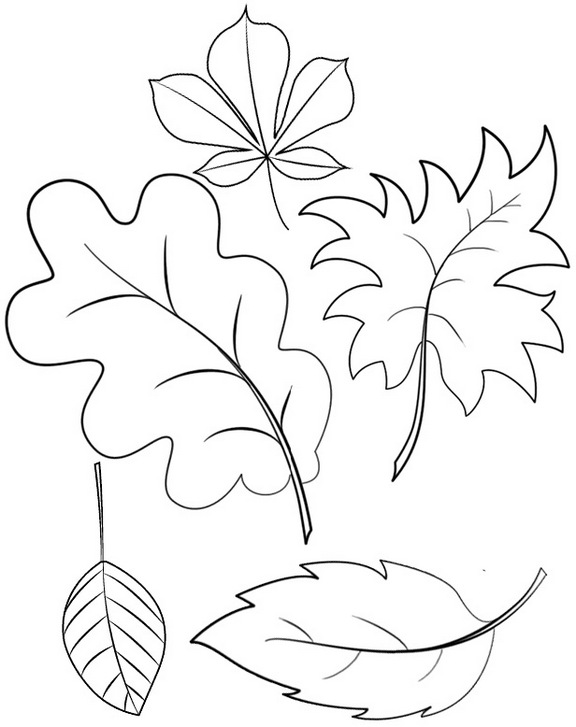 types of leaves coloring page