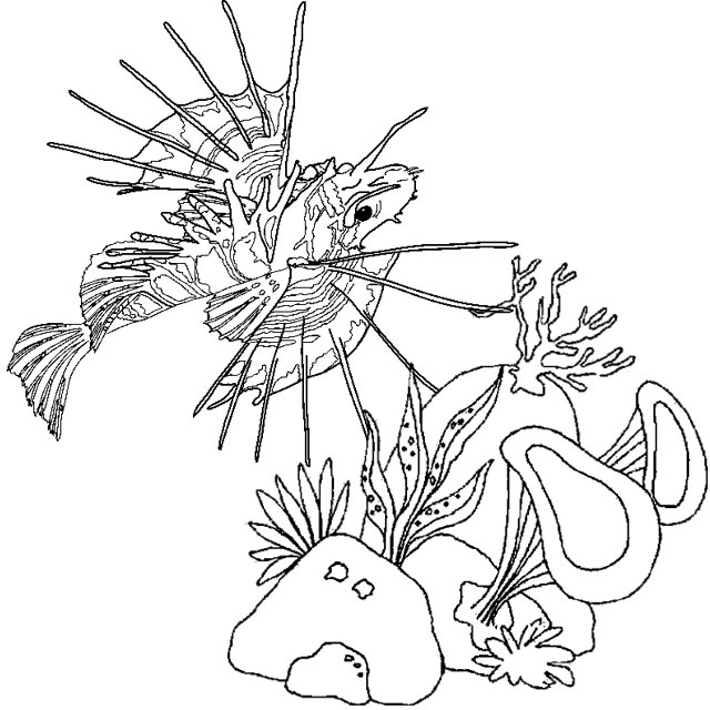 colorful lionfish coloring page