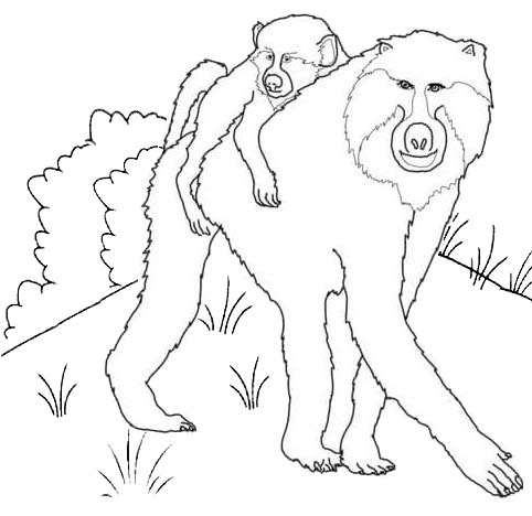 African Baboon Coloring Page