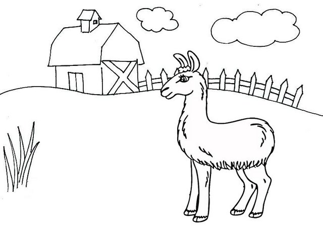 Alpaca Farm Coloring Page