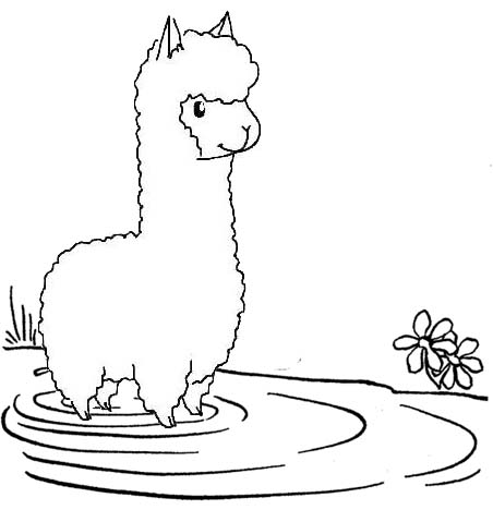 Alpaca in the lake coloring page