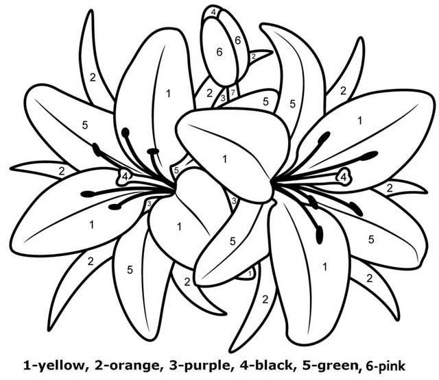 Awesome Lilies Flower Color By Numbers
