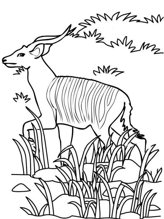 Beautiful Antelope Coloring Page for Kids