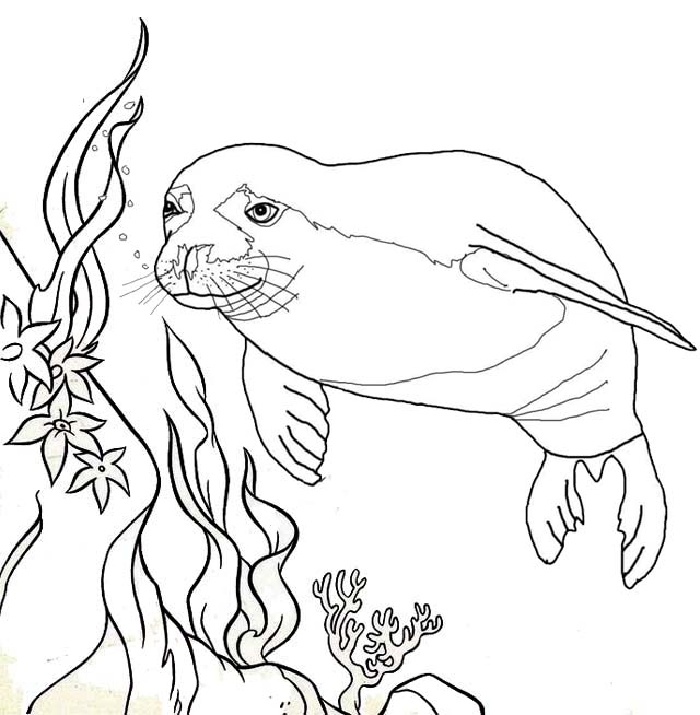 Beautiful Manatee Swimming around the coral reef coloring page