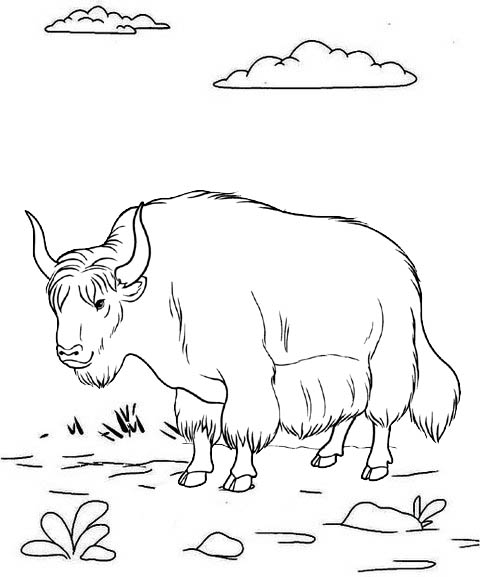Fun and Beautiful Yak Coloring Page