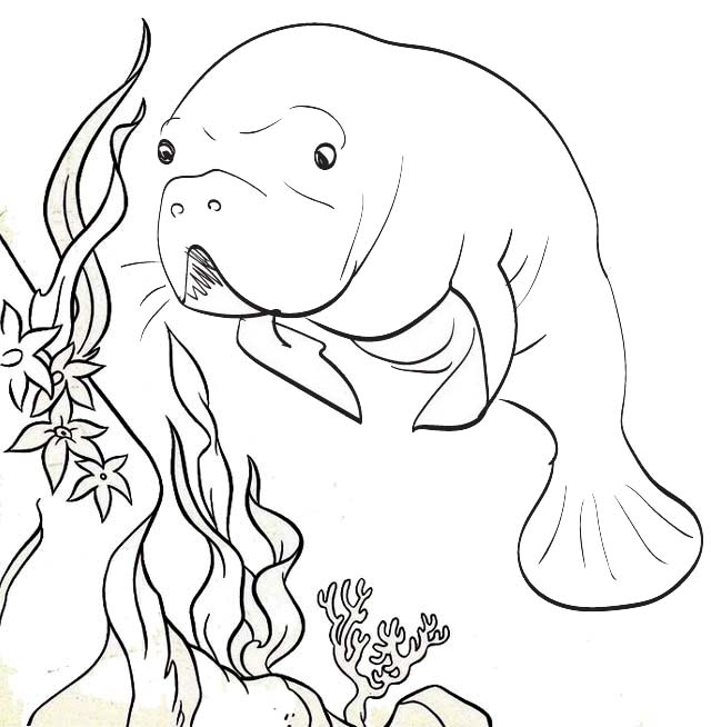 Manatee Crsytal River Coloring Page