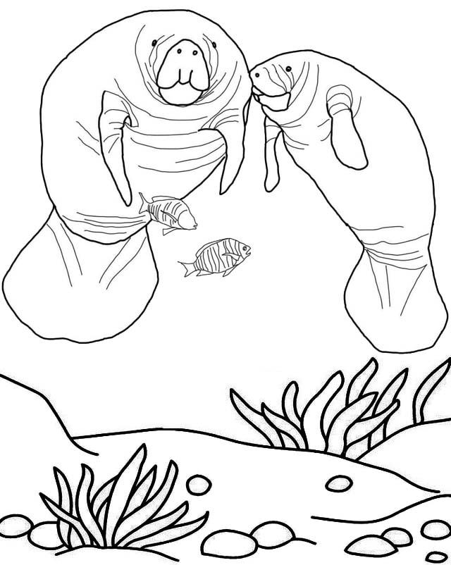 Manatee amazon coloring page