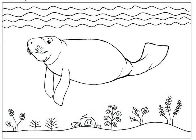 Manatee swimming under the sea coloring page