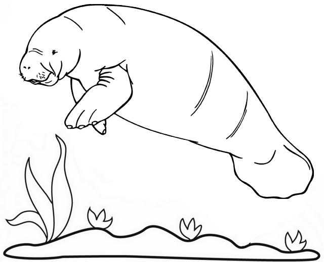 Rainbow manatee coloring page for kids
