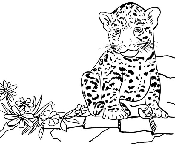 Baby Jaguar at zoo coloring page