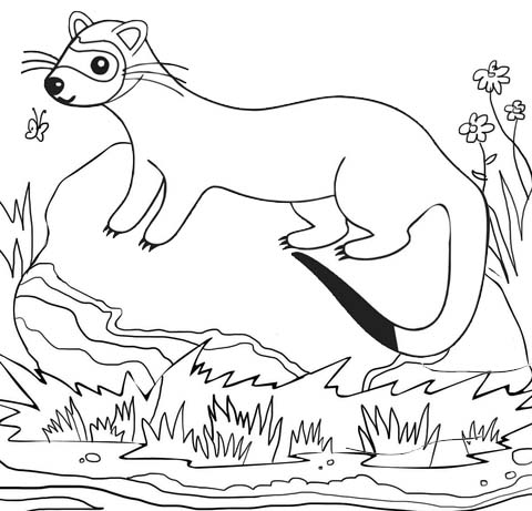 Ferret living in habitat coloring page
