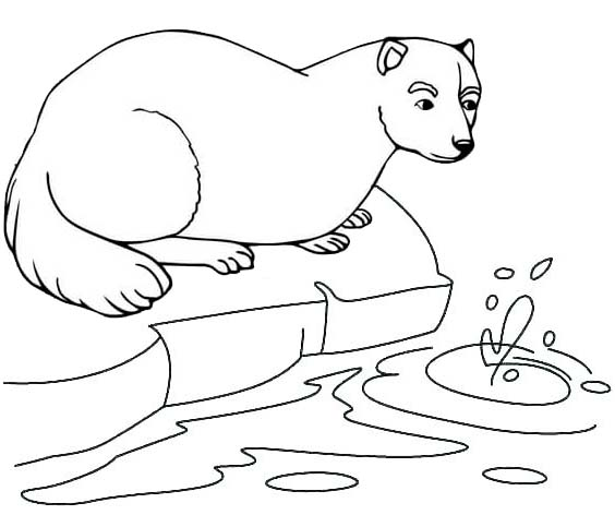 Ferret trying to drink coloring page