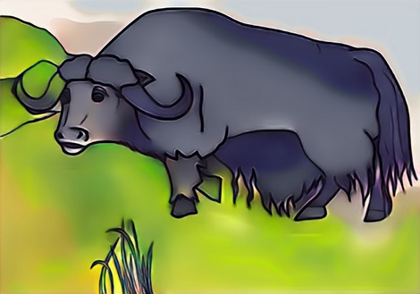 Yak coloring result for example to your kids