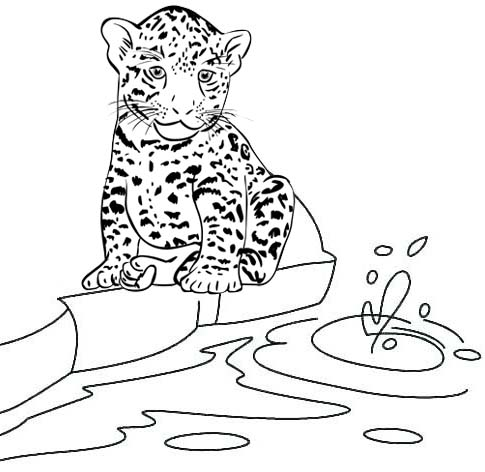 baby jaguar trying to drink water in river coloring page