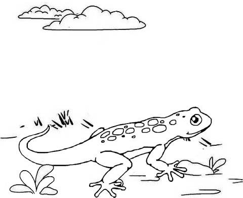 Fun Lizard Coloring Page