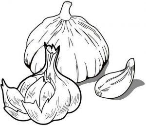garlic and a garlic clove coloring page