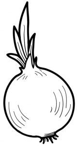 grow onion coloring page